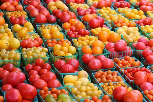 Сорта томатов для ленинградской области: особенности выращивания в теплице