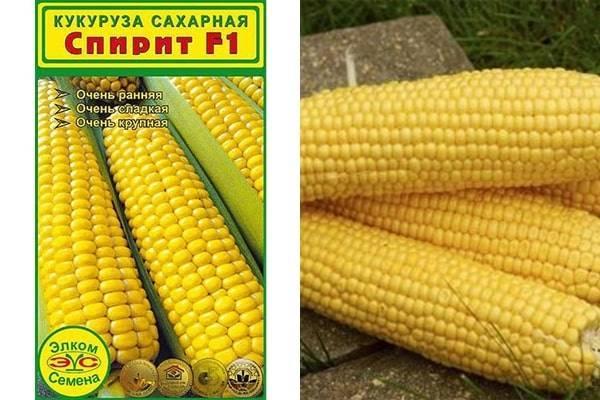 Сорта кукурузы самые популярные и самые вкусные