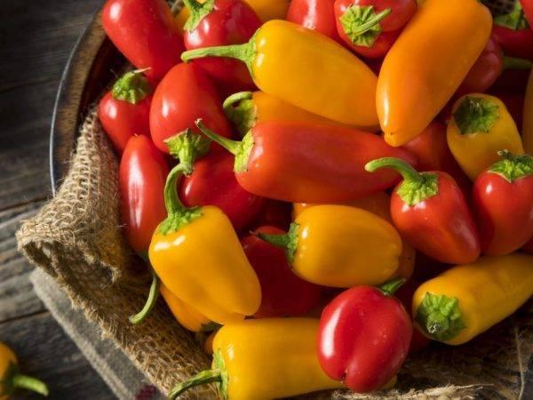 Перец сладкий апельсин - фото урожая, цены, отзывы и особенности выращивания