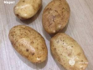Картофель янка характеристика сорта отзывы вкусовые качества. сорт картофеля янка
