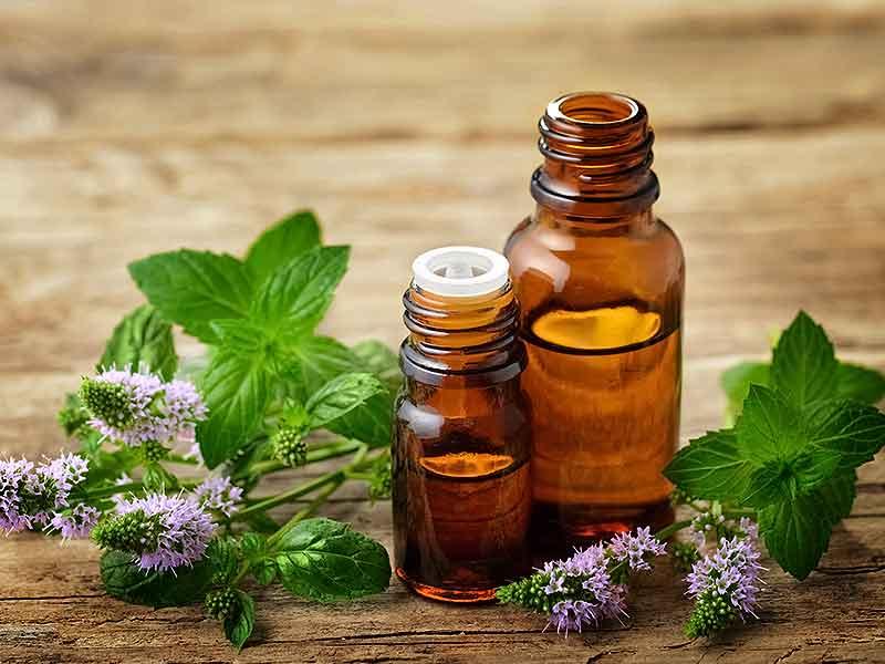 Эфирное масло мяты - ароматерапия эфирные масла