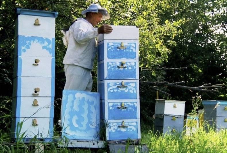 Раз корпус, два корпус: технология многокорпусного содержания пчел