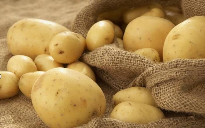 Картофель ласунок: описание и характеристика сорта, особенности выращивания, отзывы