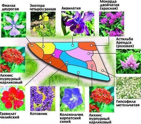 Клумба из многолетников: 2 варианта + подробное описание растений