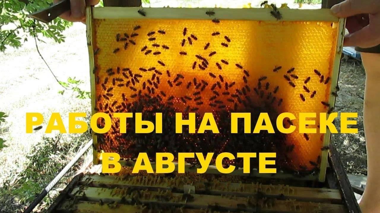 Подготовка к зиме и зимовка пчел в сибири