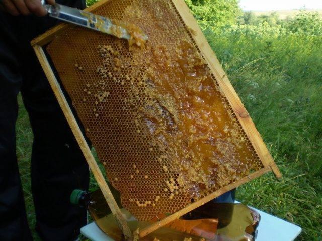 Зимовка пчел и подготовка к зимовке бочка мёда