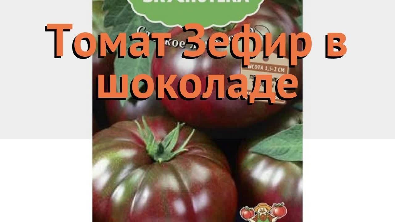 Черноплодный томат полосатый шоколад: отзывы, фото и особенности сорта