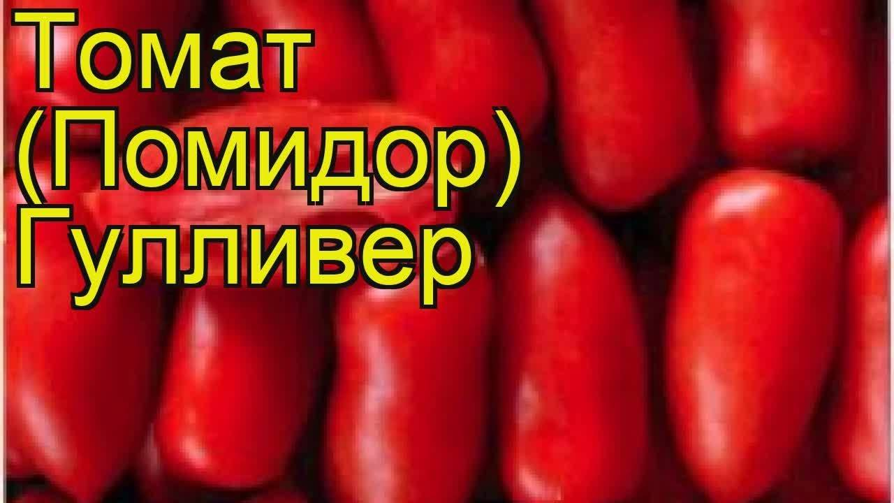 Характеристика и описание сорта томата гулливер, его урожайность