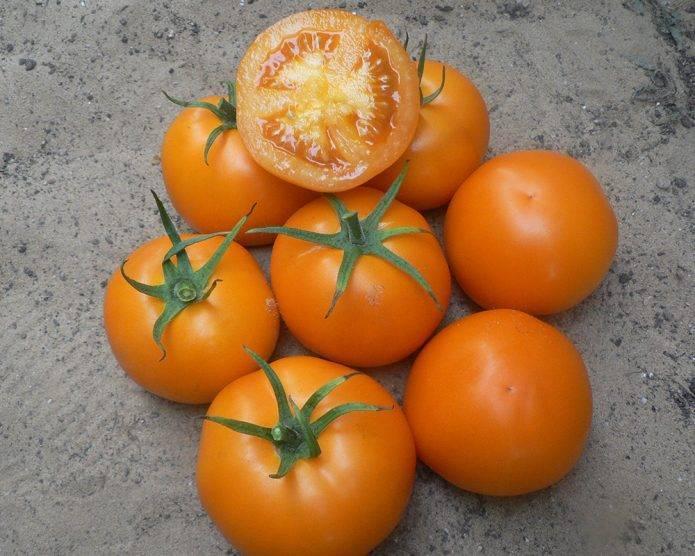 Желтые и оранжевые сорта томатов — характеристика, описание, фото