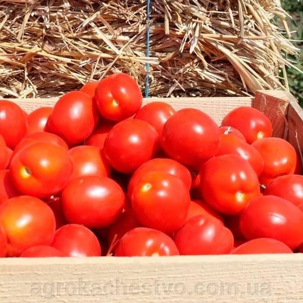 Картофель астерикс: характеристики сорта, урожайность, отзывы