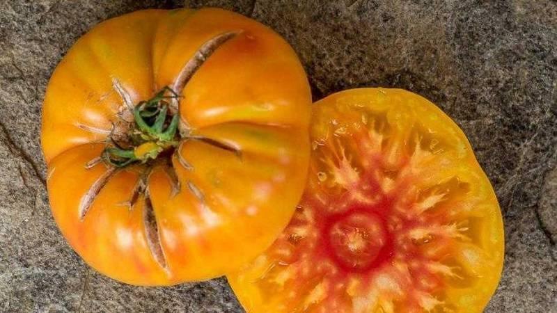 Медовый салют – румяный томат на радость огороднику. описание, агротехника, отзывы