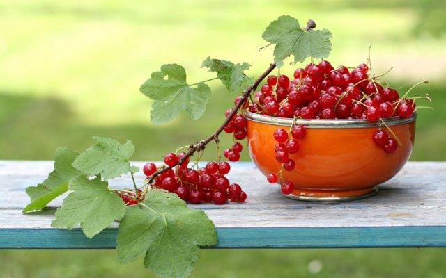 Высокоурожайный сорт пленивший многих — красная смородина «ненаглядная»
