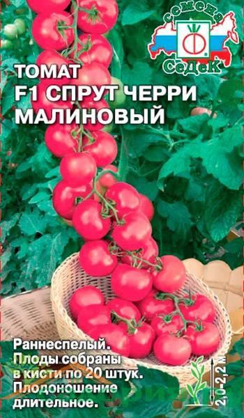 Томат спрут f1 выращивание в открытом грунте