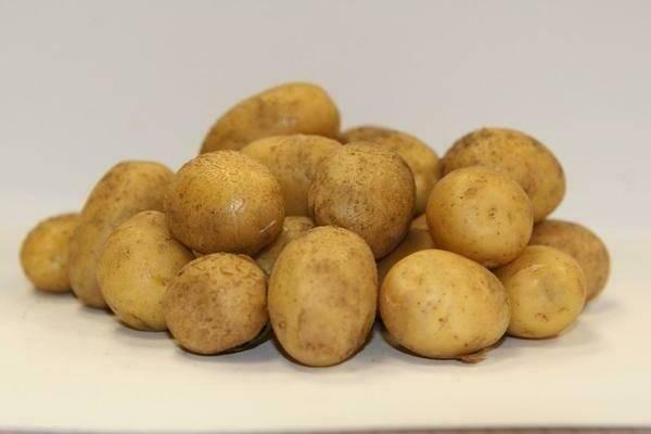 Сорт картофеля латона: описание и характеристика, отзывы
