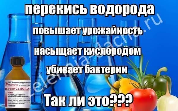 Перекись водорода для рассады помидор: 3 способа использования