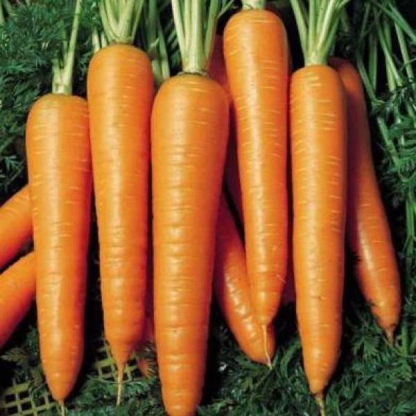 Морковь вита лонга отзывы