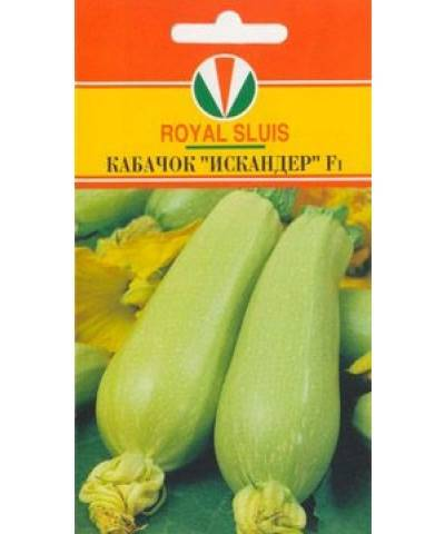 Искандер кабачок – урожай высок