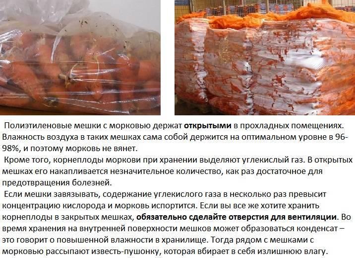 Правильное хранение моркови в холодильнике