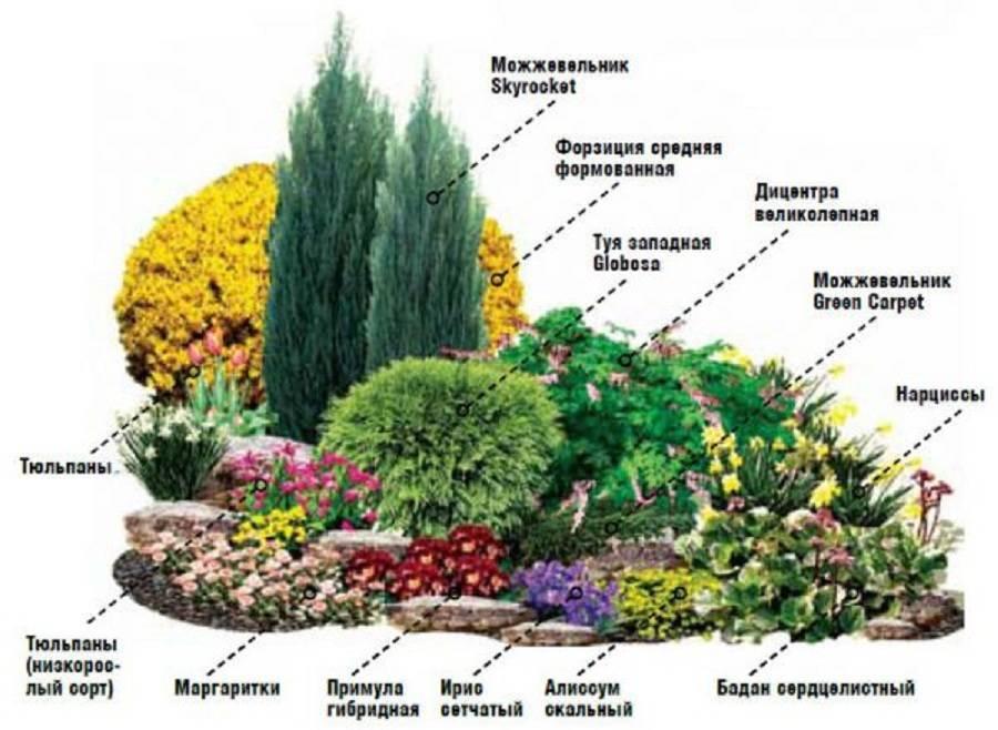 Клумбы из многолетников: правила и особенности выращивания для новичков (85 фото)