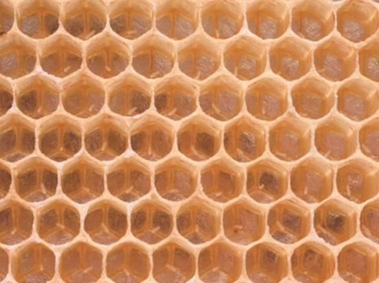 Правила подкормки пчел осенью