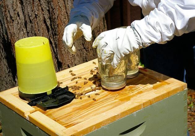 Осенняя подкормка пчел сахарным сиропом: сроки, таблица, как и когда подкармливать?