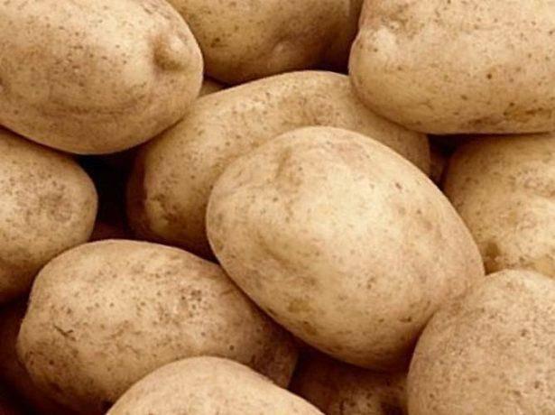 Сорт картофеля «крона (кроне)» – описание и фото
