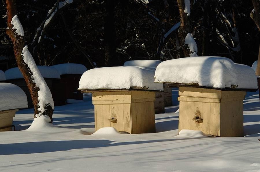 Сколько меда нужно оставлять пчелам на зиму: советы, фото- и видеообзор