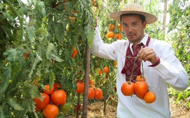 Сорт с нежно-сладкой мякотью — томат оранжевая клубника: описание и его характеристики