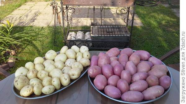 Картофель янка — описание сорта, фото, отзывы, посадка и уход