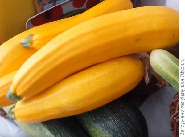 Обзор популярных сортов желтоплодных кабачков