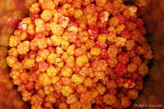 Морошка — описание ягоды и растения, полезные свойства и противопоказания, состав, калорийность, фото