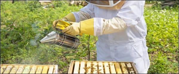 Дымарь пчеловода своими руками