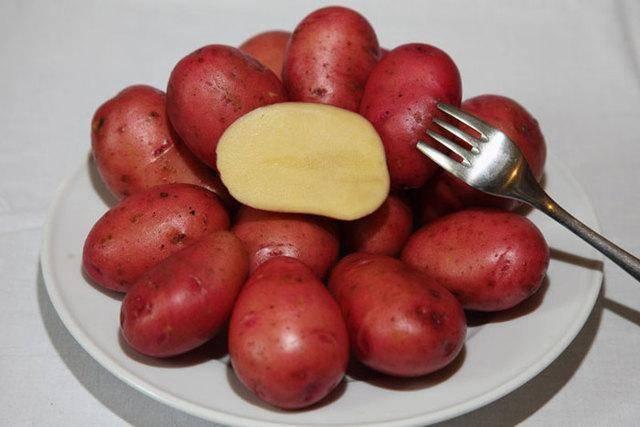 Описание и характеристика картофеля розара с фото, отзывы