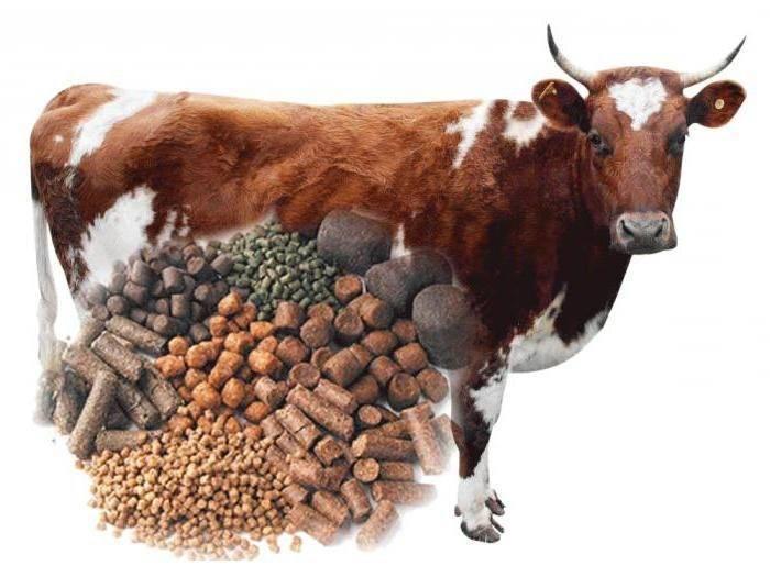 Кетоз у коров (симптомы и лечение)