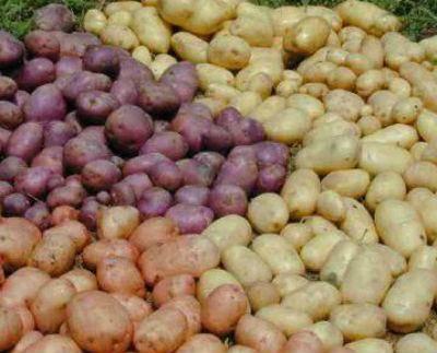 """Картофель """"смуглянка"""": описание сорта и фото, рекомендации по уходу и выращивание, а так же советы по употреблению"""