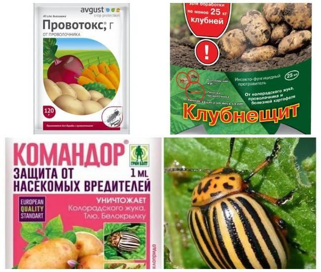 Препарат табу для обработки картофеля: принцип действия и отзывы огородников
