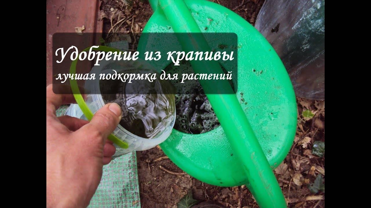 Удобрение из крапивы: за что так ценят садоводы