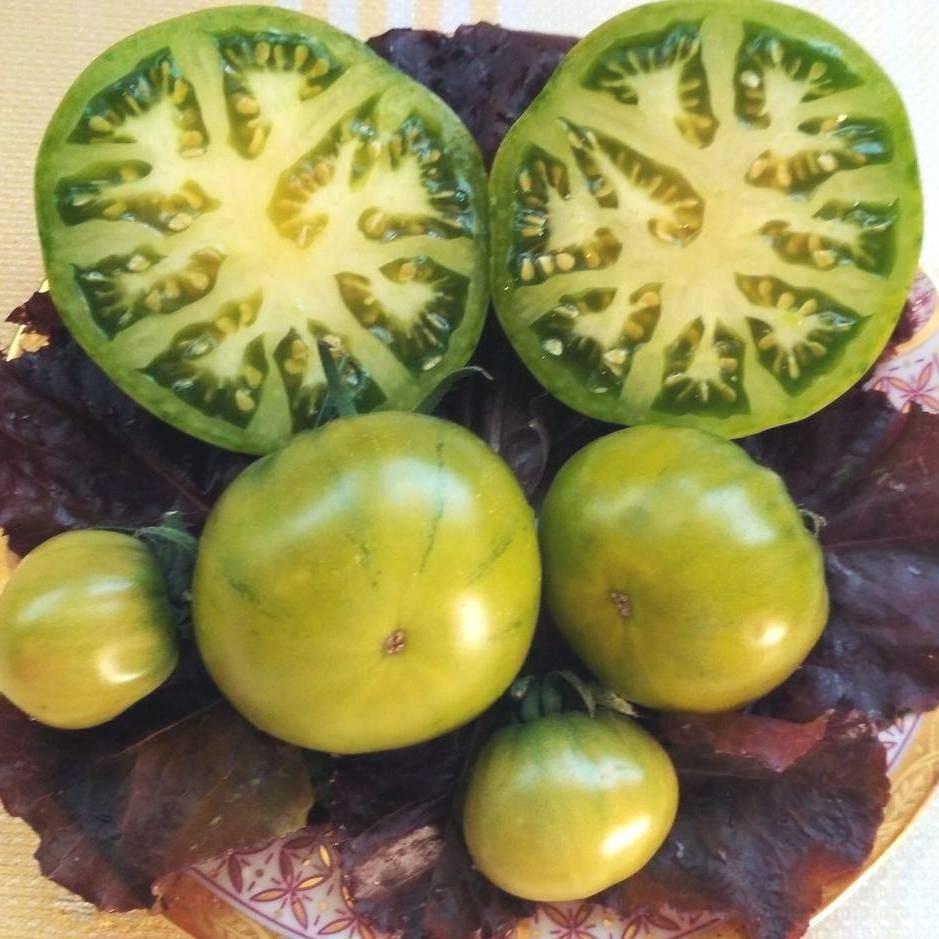 Сорт томата «болото»: описание, характеристика, посев на рассаду, подкормка, урожайность, фото, видео и самые распространенные болезни томатов