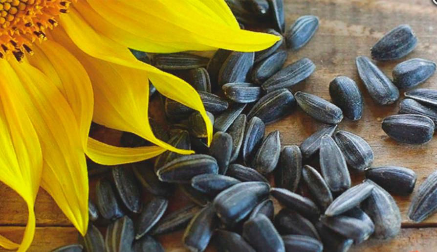 Можно ли поправиться от семечек жареных. можно ли поправиться или похудеть от семечек? поправляются ли от семечек тыквы