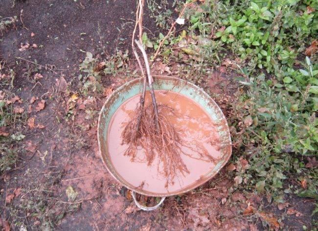 Садовые вары для обработки деревьев: рецепты и правила применения