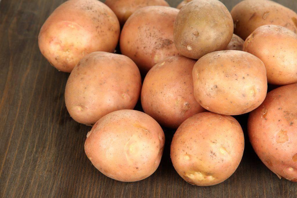 Основные характеристики сорта картофеля ласунок и особенности его выращивания