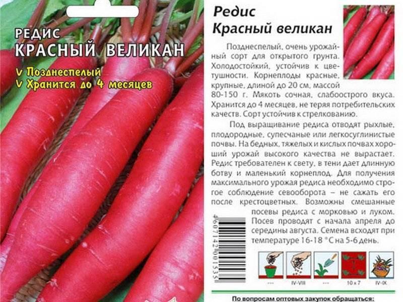 Редис красный великан: описание сорта, фото, отзывы, как и когда сажать, выращивание