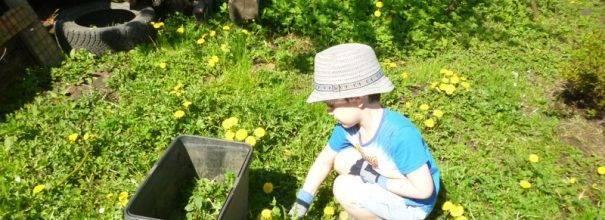 Крапива: 5 способов применения в саду и огороде