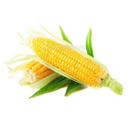 Все о вареной кукурузе: сколько калорий, какие витамины, польза и вред продукта