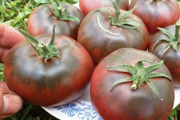 Черный бизон: описание сорта томата, характеристики помидоров, посев