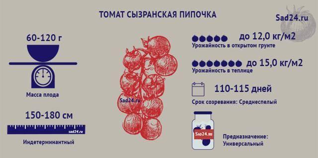Томат сызранская пипочка: характеристика и описание сорта с фото