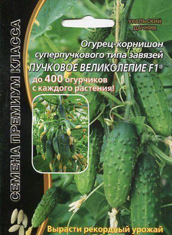 Огурец пучковое великолепие f1 — описание и характеристика сорта