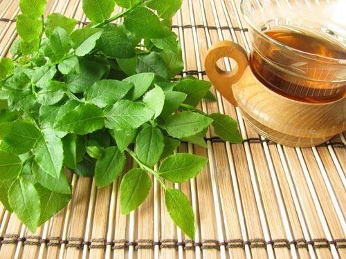 Когда собирать и как заваривать черничник. листья черники: лечебные свойства и противопоказания
