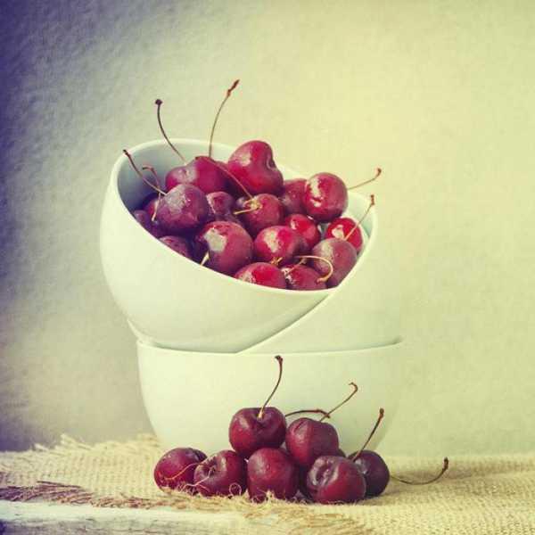 Особенности посадки вишни встреча и ухода за ней