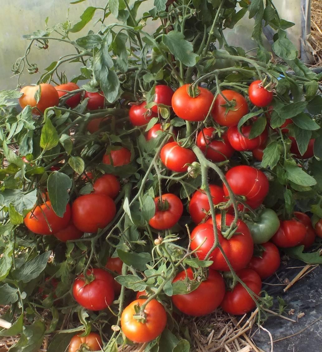 Почва для рассады томатов и перцев